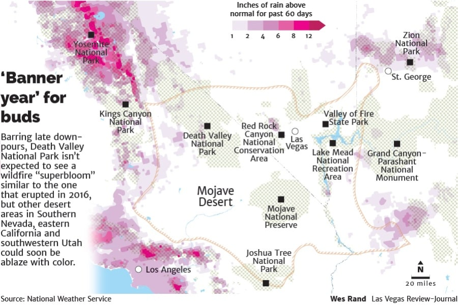 Wildflowermap No 'superbloom' for Death Valley, but other areas will blaze with color andre bloom california carpeted death death valley desert flowers lake mead las las vegas mojave national national park park rainfall southern utah valley vegas [your]NEWS