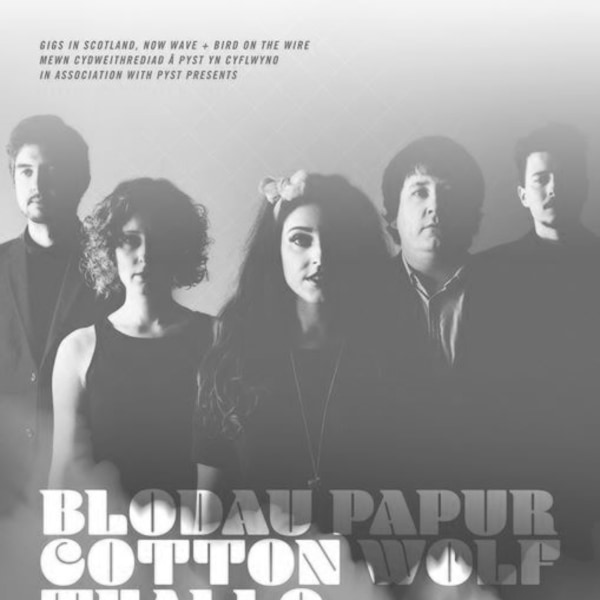 Welsh Language Gig: Blodau Papur, Cotton Wolf & Thallo at The Victoria promotional image