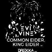 Chaos Theory presents: Evi Vine / Common Eider, King Eider / Drekka at The Victoria promotional image