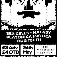 Sex Cells, Malady, Platonica Erotica, Bug Teeth  at Windmill Brixton promotional image