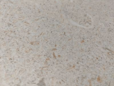 tan, white porcelain Snow by florida tile