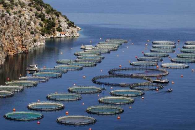 ocean fish farming