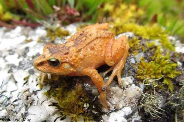 tiny frogs