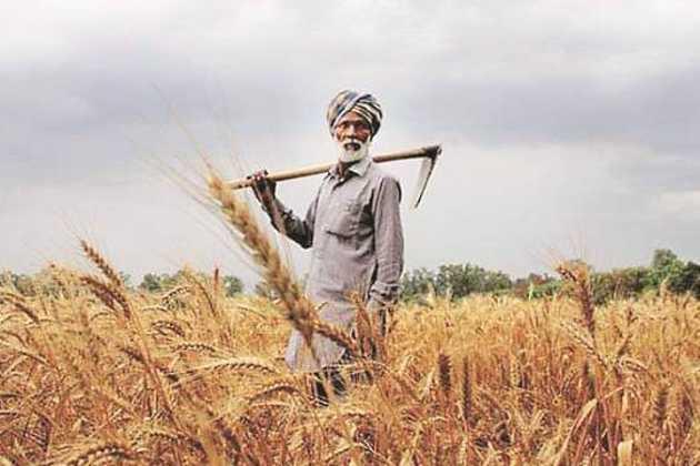 Farmer in India