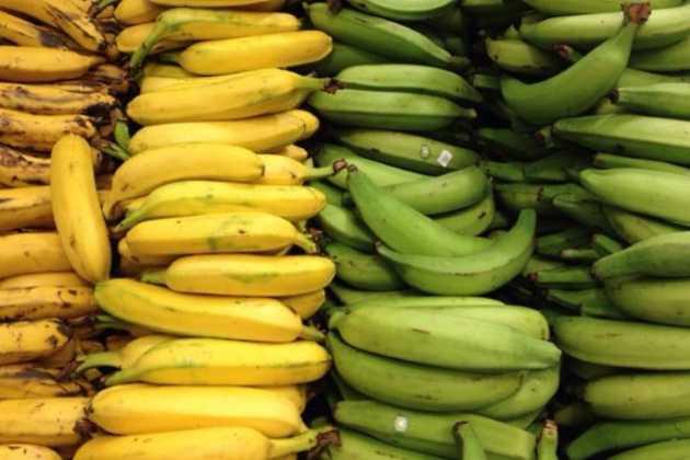 Ecuador bananas