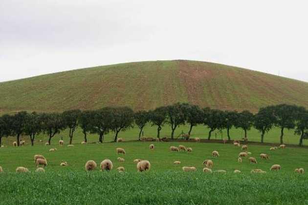 Portuguese farm