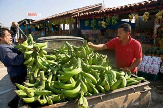 Mexico bananas