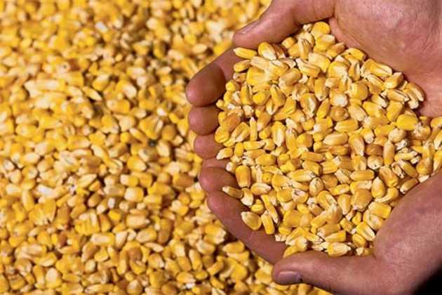 US corn farmers