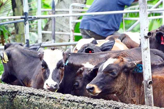 Fiji Cooperative Dairy Company