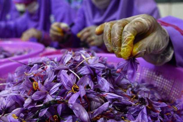 Afghanistan saffron