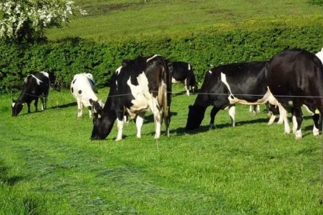 Green Grass Farms