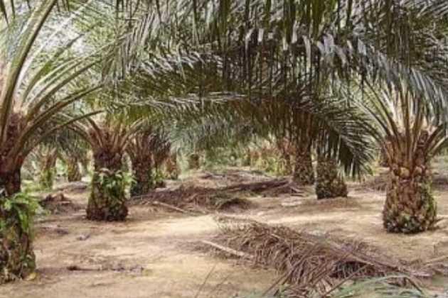 Malaysian palm oil
