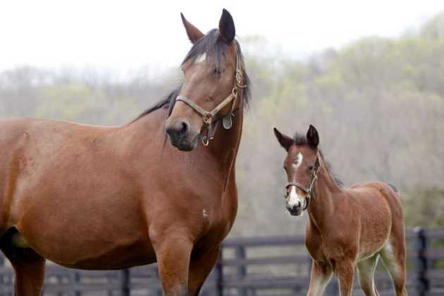 New Jersey horses