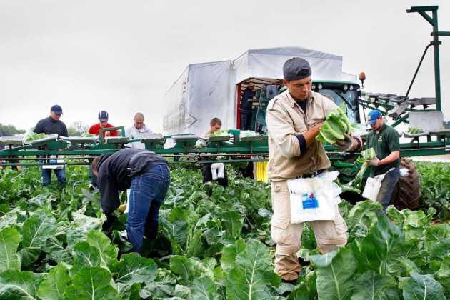 UK farmers