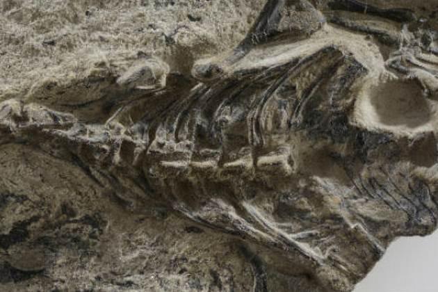 oldest lizard fossil