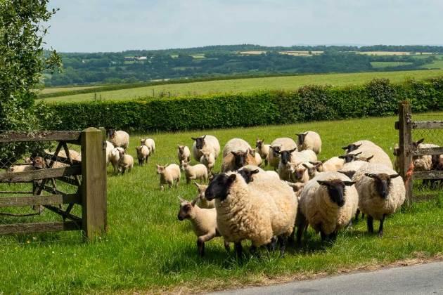 Irish farming