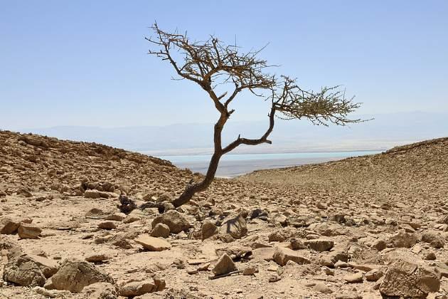 Israel drought
