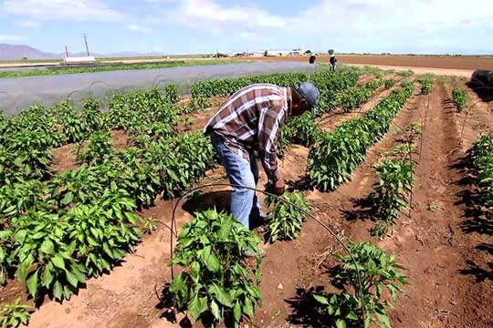 Chile agriculture