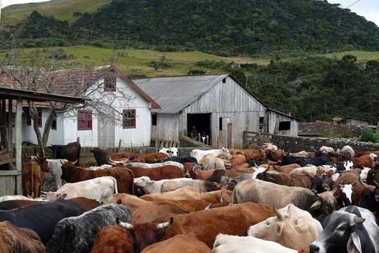 Brazil farm