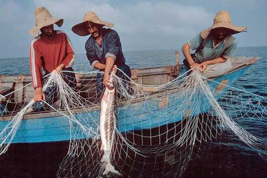 Iran Fisheries