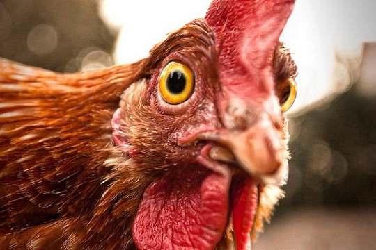 France H5N8 bird flu