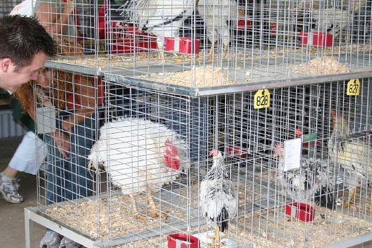 Pennsylvania fair