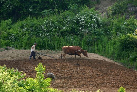 South Korea farmer