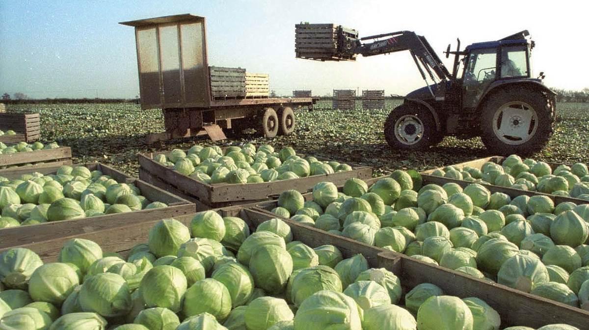 Arable farm