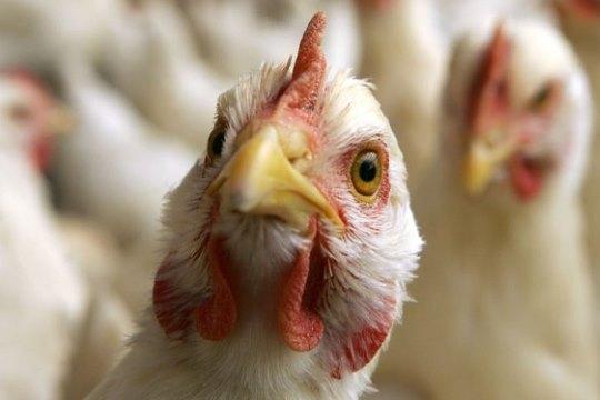 France bird flu