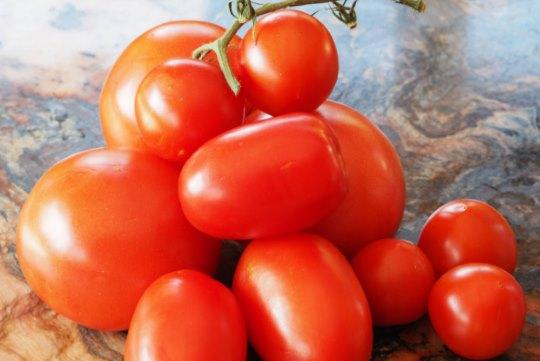 India tomatoes