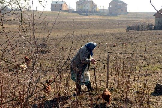 Ukraine land