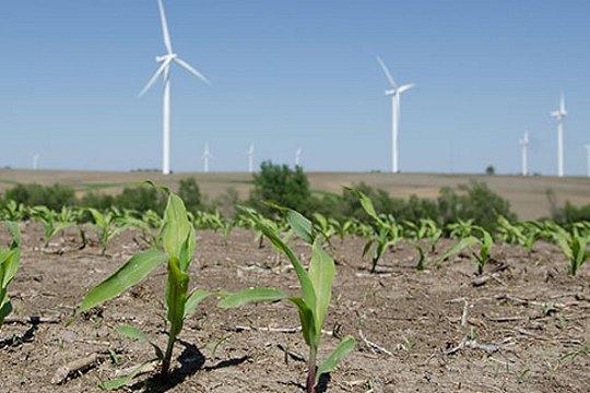Wind turbines crops