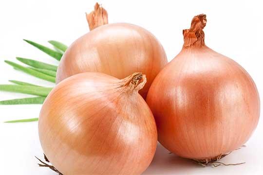 Panama onion