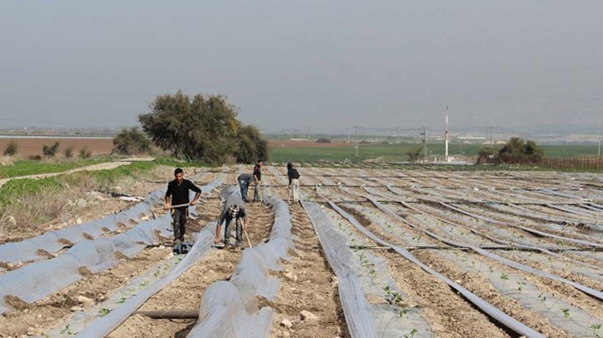 Gaza farm