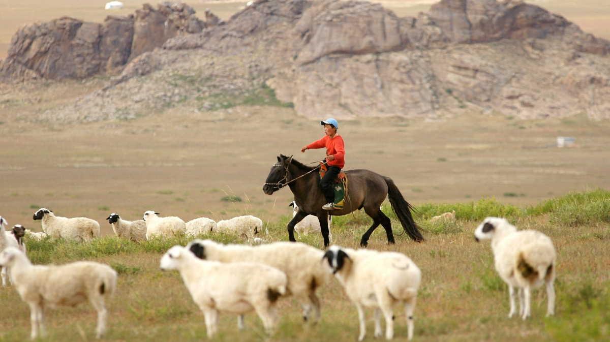 Mongolia livestock