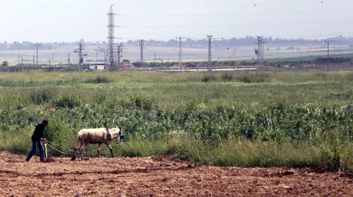Palestinian farm