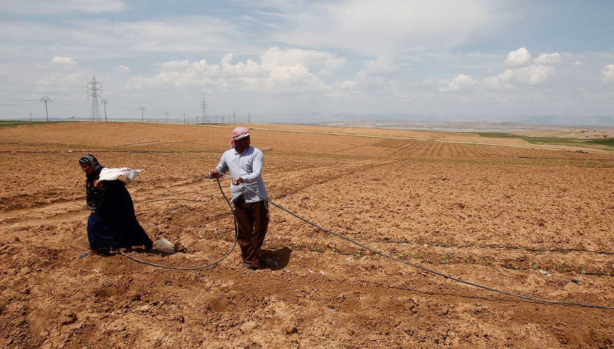 A farm in Iraq