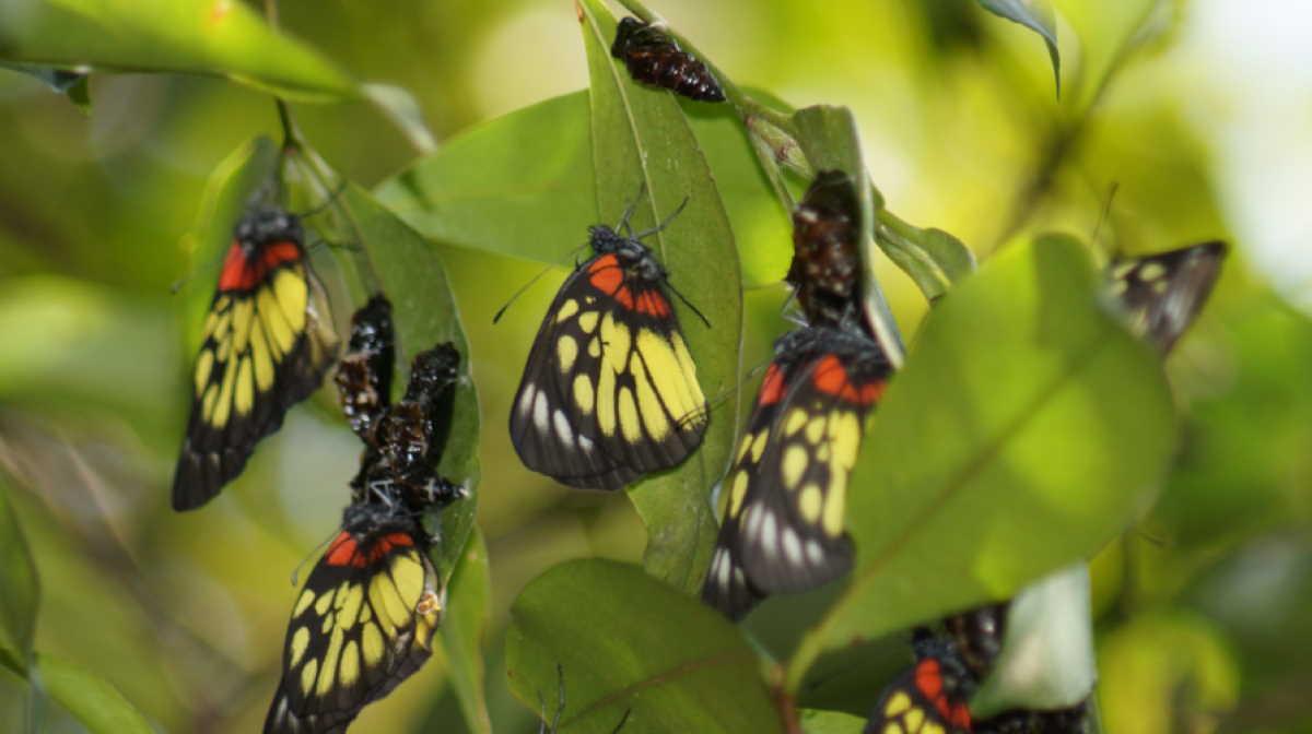 Butterflies in Hong Kong