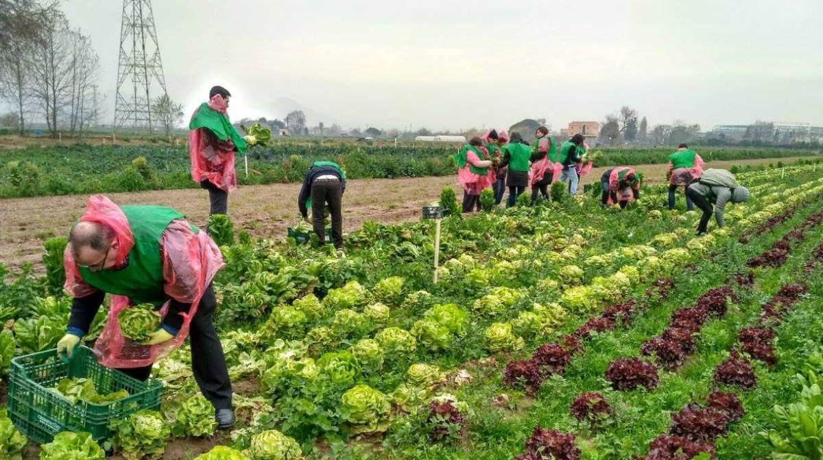 Spain farm