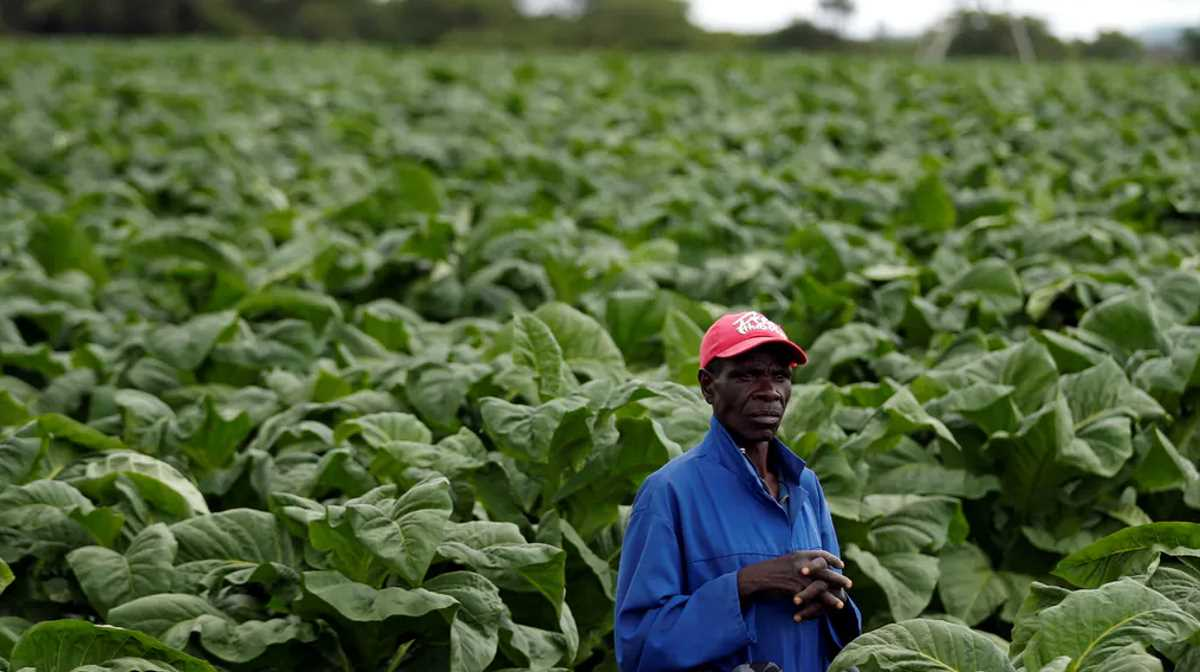 Farmers in Zimbabwe