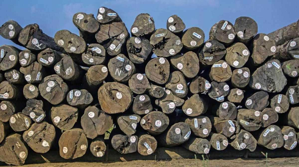 Myanmar timber