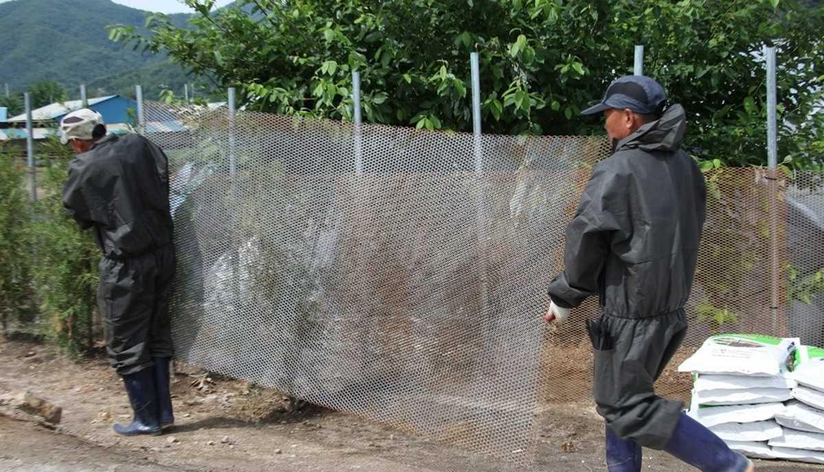 South Korea fence