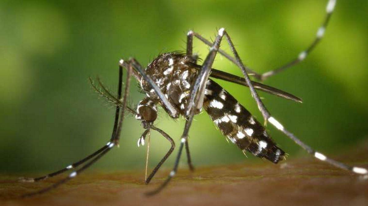Philippines dengue