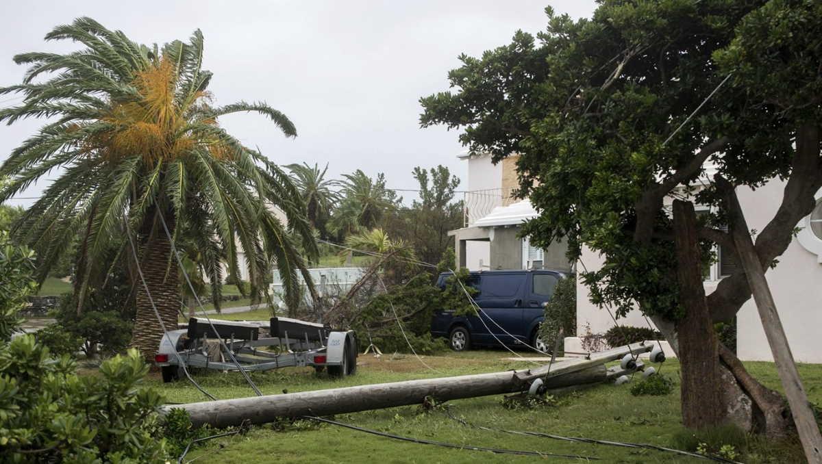 Bermuda damages