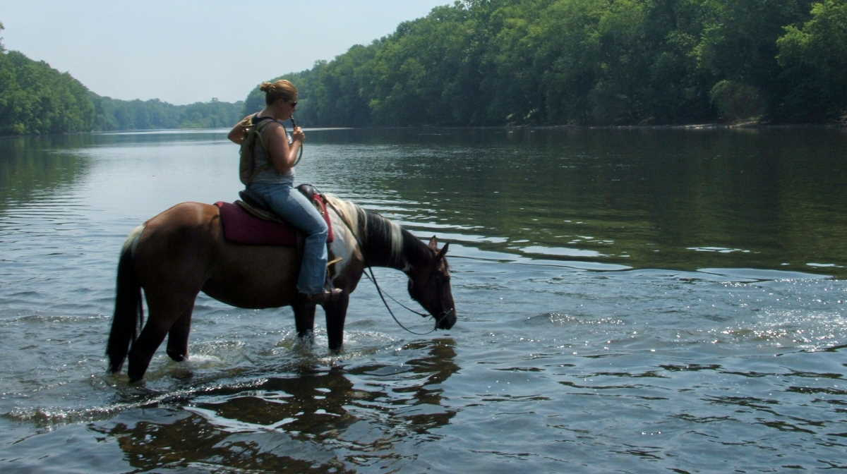 Pennsylvania horses
