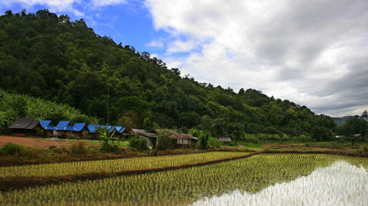 Thailand rice