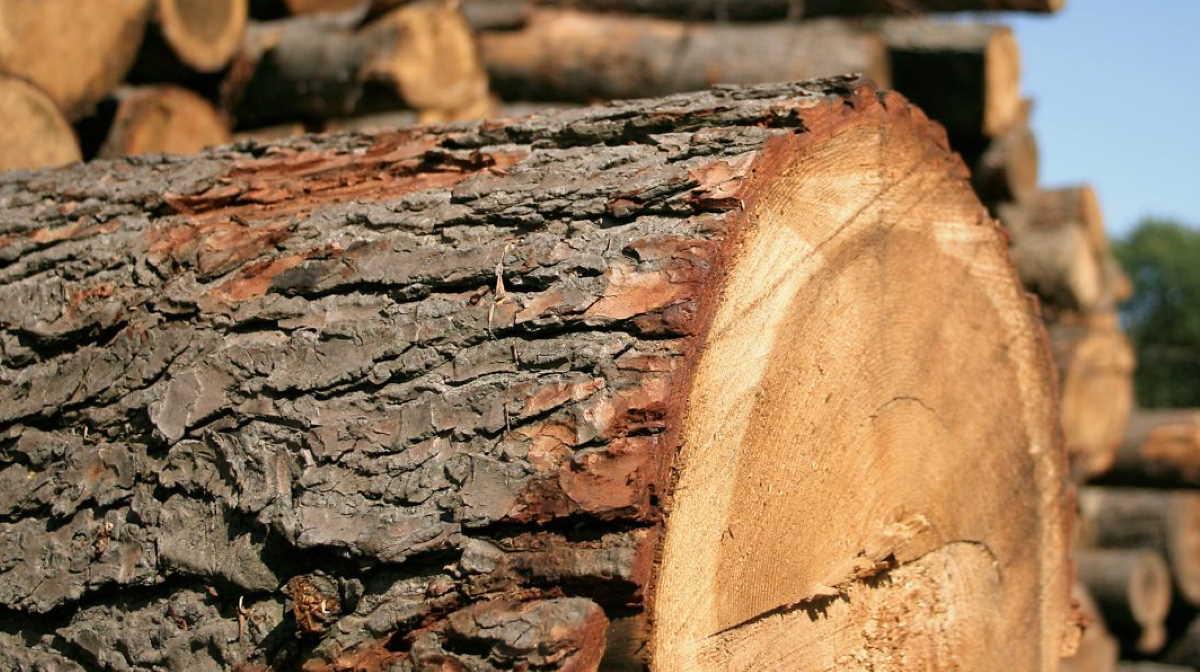 Canada softwood lumber
