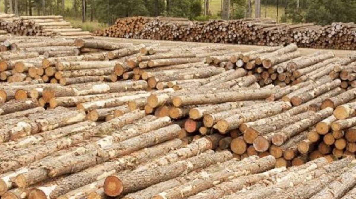 New Zealand timber