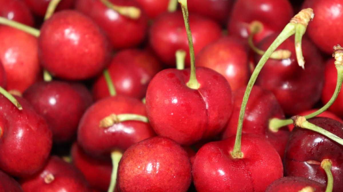 Turkey cherry