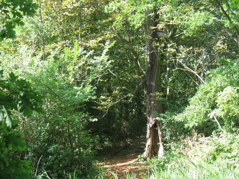 Dacres Wood Nature Reserve
